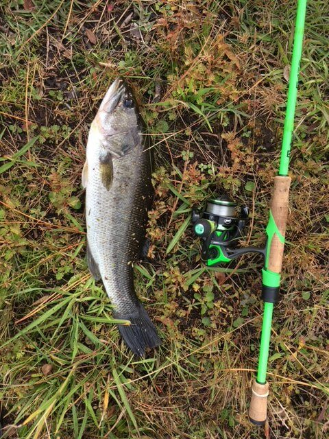 A large mouth bass caught in one of the fresh water ponds in St. James Plantation.